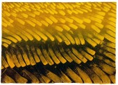 Whispering Grass, 205mm x 290mm, Relief & Carborundum. Edition 5